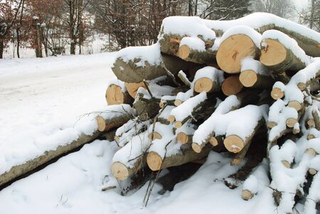 Wood before sawing for firewood under the snow in winter. Near the road photo