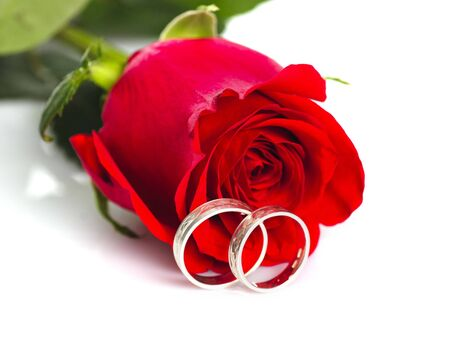 bodas de plata: Red aumentó con anillos de plata sobre fondo blanco. Tarjeta postal de la boda.