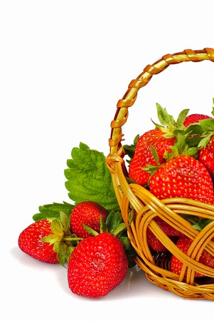 Scattering fresh strawberries from basket on white. Shaoow feep of field photo