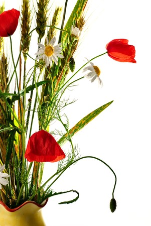 Wild flowers bouquet with wheat, poppy and ox-eye daisy isolaed on white. Shallow deep of field. photo