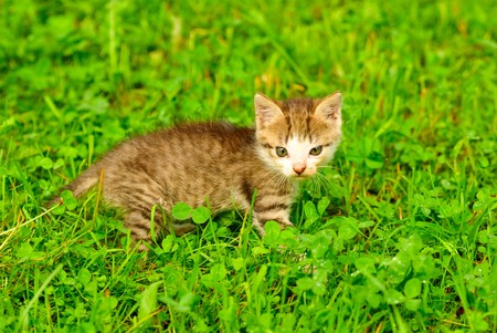 Kitten on green grass close up, shallow deep of field. Stock Photo - 7229121
