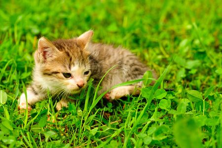 Kitten on green grass close up, shallow deep of field. Stock Photo - 7229120