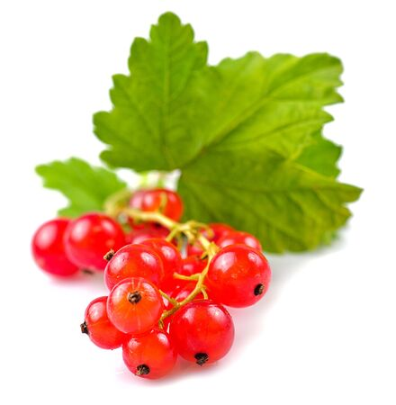 Currants with green leafs isolated on white background. Close up, shallow deep of field. photo
