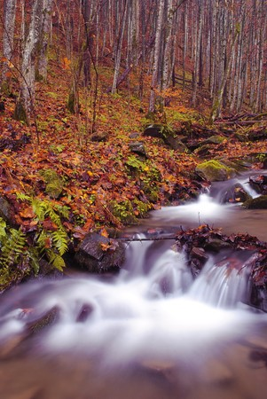 Mountain river is running down in autumnal forest photo