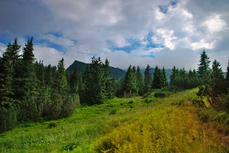 Beautiful blue sky and green grass and forest in Carpathian mountains