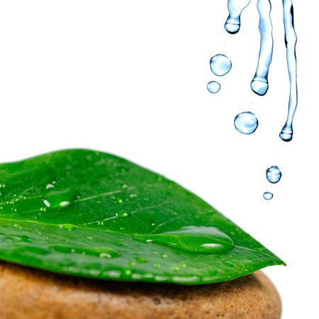 Green leaf with water drops on the stone, isolated on white, close up photo