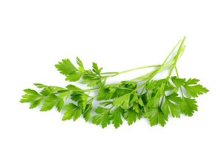 Twigs of green parsley isolated on white close up Stock Photo - 7768591