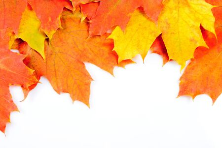Maple leaves frame isolated on white background Stock Photo - 8032809