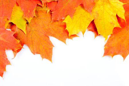 grunge leaf: Maple leaves frame isolated on white background
