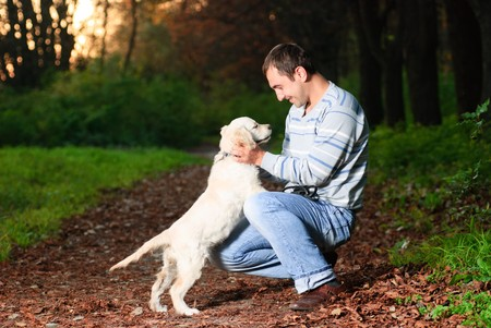 dog walking: Golden retriever and man are playing in park Stock Photo