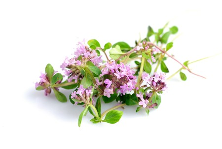 thyme: fresh thyme herb flowers isolated on white Stock Photo