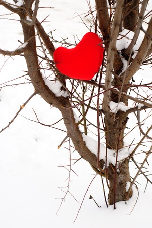 Red heart on snow tree close up. Valentine concept photo
