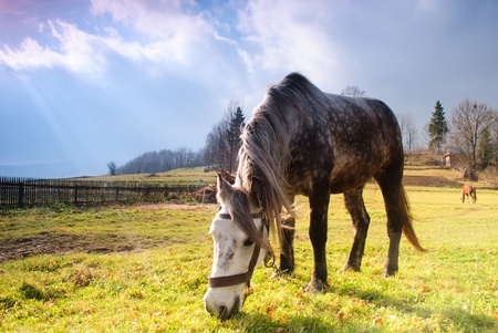 Horse on pasture in evening glow. Soft focus photo