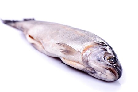 Dead trout isolated on white, prepared for cooking photo