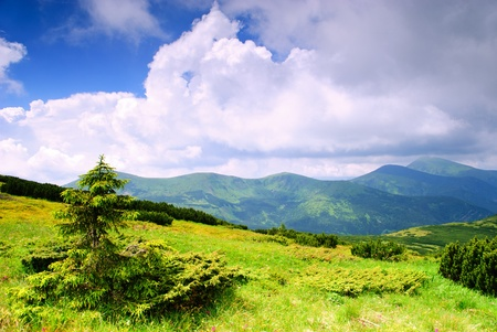 Beautiful blue sky and dry grass high up in Carpathian mountains