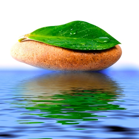 Green leaf with water drops, reflected in the water photo
