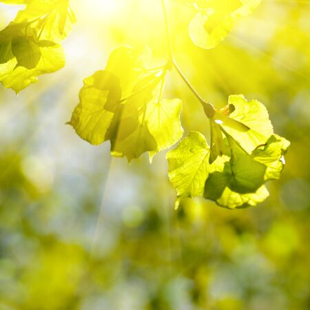 Spring bokeh with sunlight. Abstract background for desing. Stock Photo - 9252934