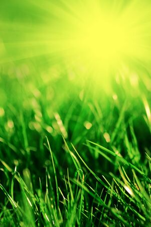 Spring bokeh with sunlight. Abstract background for desing. photo