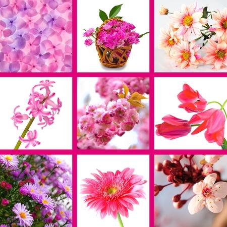 wild pink flowers collage of nine photos  photo