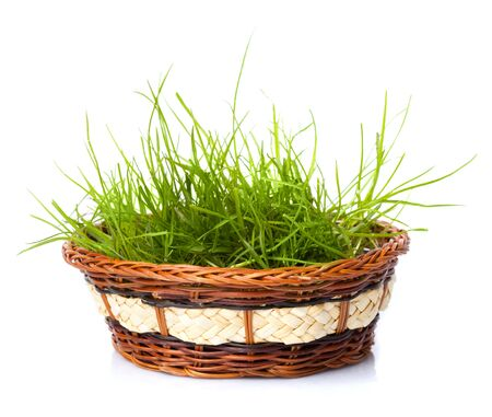 fresh green grass in basket isolated on white background photo