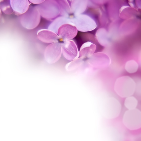 blooming purple: close up beautiful lilac background with light violet flowers Stock Photo