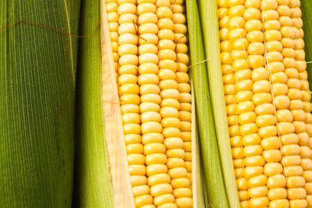 Background from corn cobs closeup photo