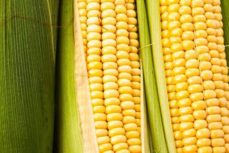 mais: Background from corn cobs closeup