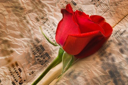 Aged notes with grease spots and red rose. Musical background  photo
