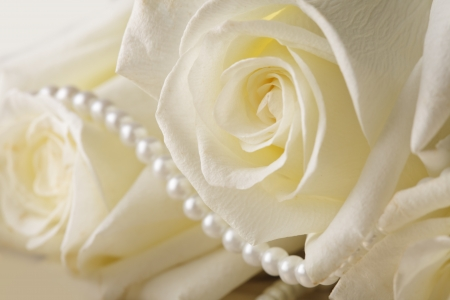 Pearl beads and cream rose on the silk background photo