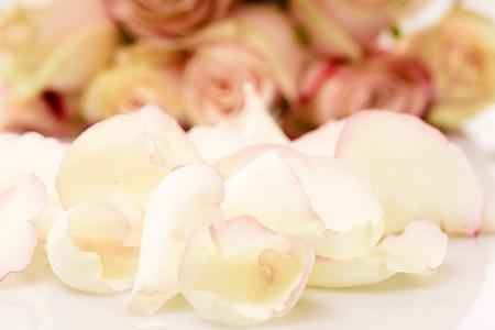 pink roses petals like a background closeup photo
