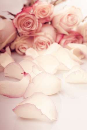 flourishing: pink roses petals like a background closeup