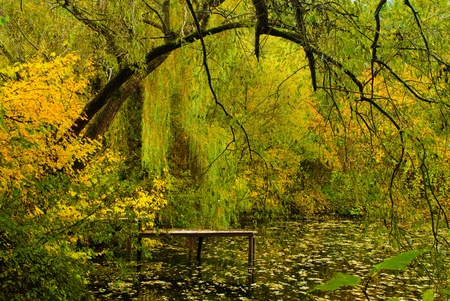 weeping willow: A view of lake bathed in golden light with a weeping willow tree in sharp focus in the foreground Stock Photo