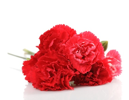 red carnation flower isolated on white Stock Photo - 11912469