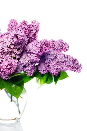 syringa: lilac bouquet isolated on white.Llight violet flowers in glass vase
