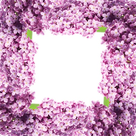 close up beautiful lilac background with light violet and white flowers photo
