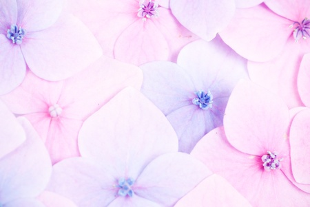 Pink flower background close up. Romantic and love pattern photo