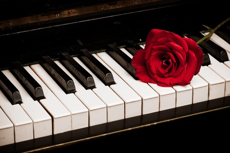 Retro piano keyboard and red rose closeup photo
