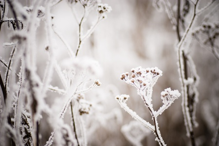 Winter background closeup for design photo