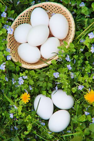 White eggs on green grass and flowers photo