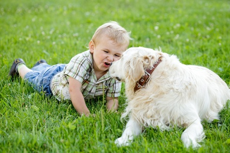 Cute toddler blonde boy with golden retriever outdoor Stock Photo - 13107134