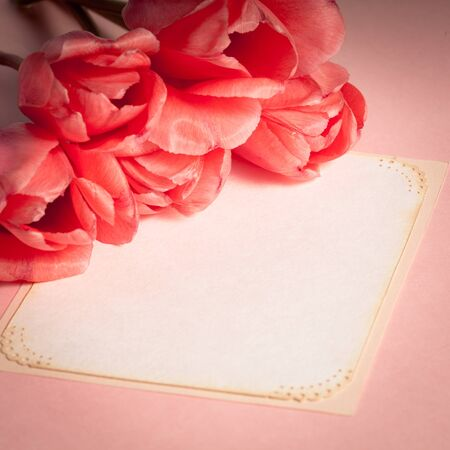 Pink tulips with card closeup Stock Photo - 13501318