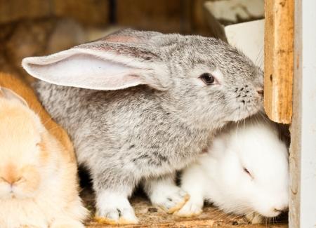 hutch: Three different rabbits closeup in hutch