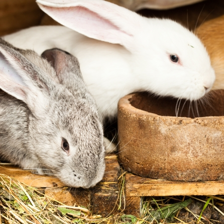 european rabbit: Three different rabbits closeup in hutch