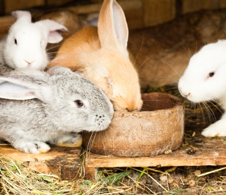 Three different rabbits closeup in hutch photo