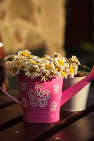 Daisies in a rustic watering can on bench photo