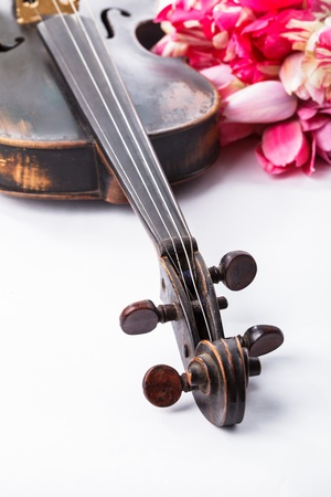 Black old violin with tulips on white Stock Photo - 14116091