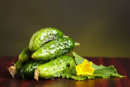 Cucumbers with flowers and green leaveas on the table  photo