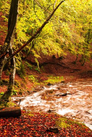 Fall forest with river in rainy day photo