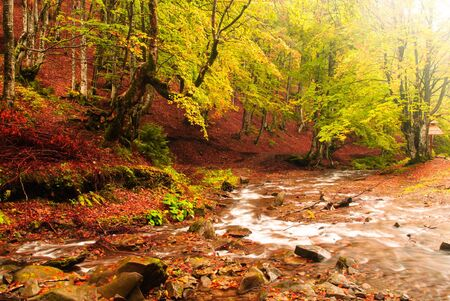 streamlet: Fall forest with  streamlet in the day Stock Photo