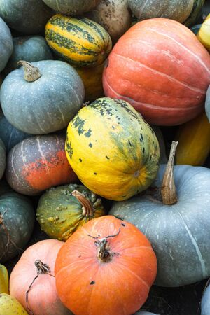 Pumpkin background, diff�rents types de plan rapproch� de potiron photo